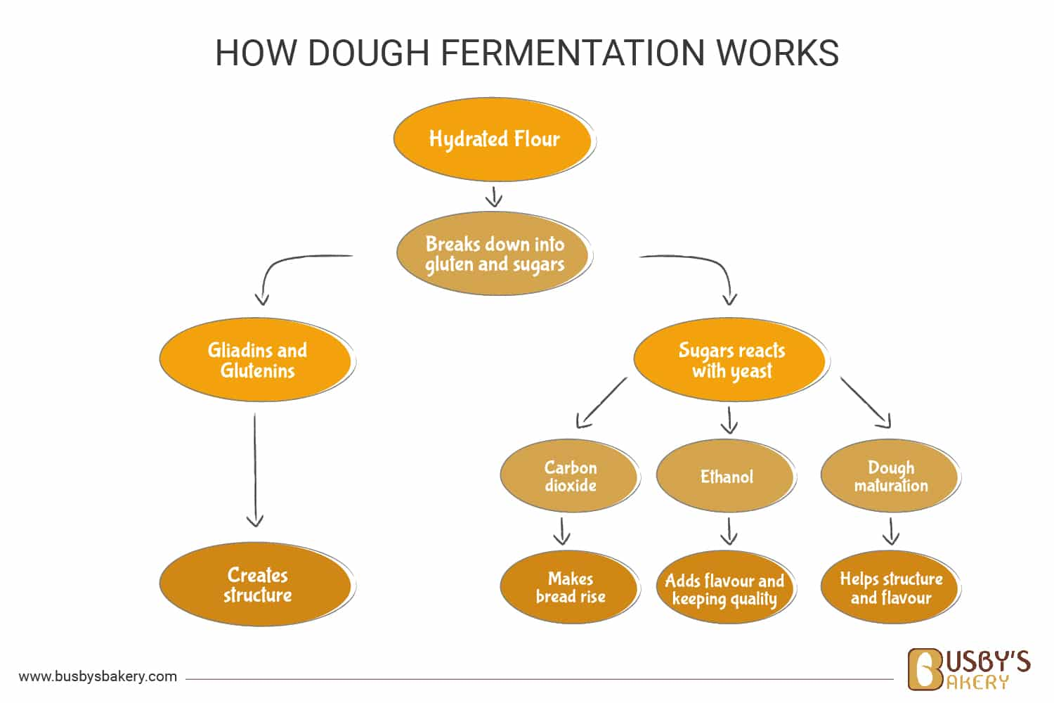 How dough fermentation works diagram