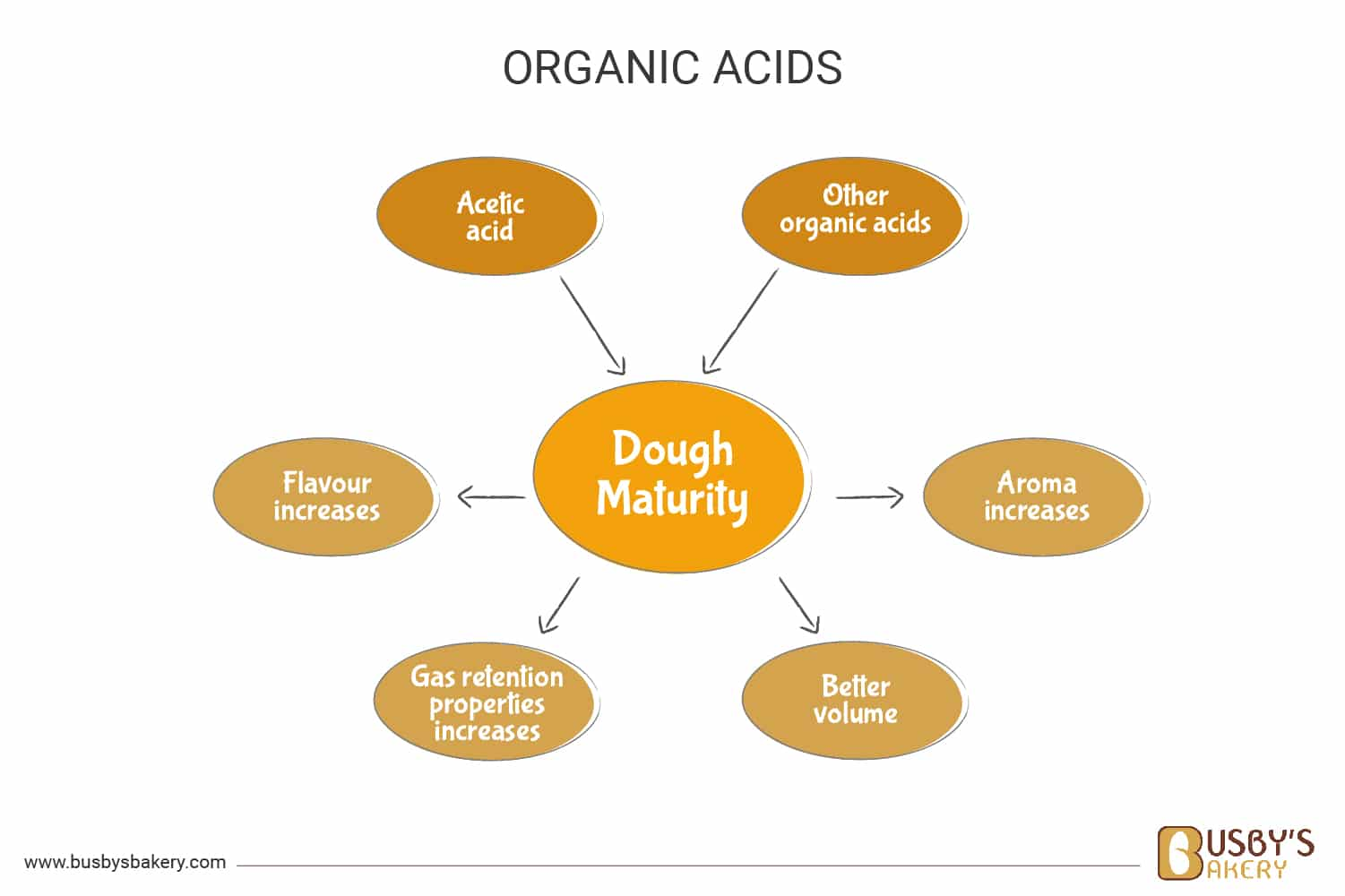 How organic acids improve the dough during fermentation